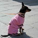010412 Burano Hund4